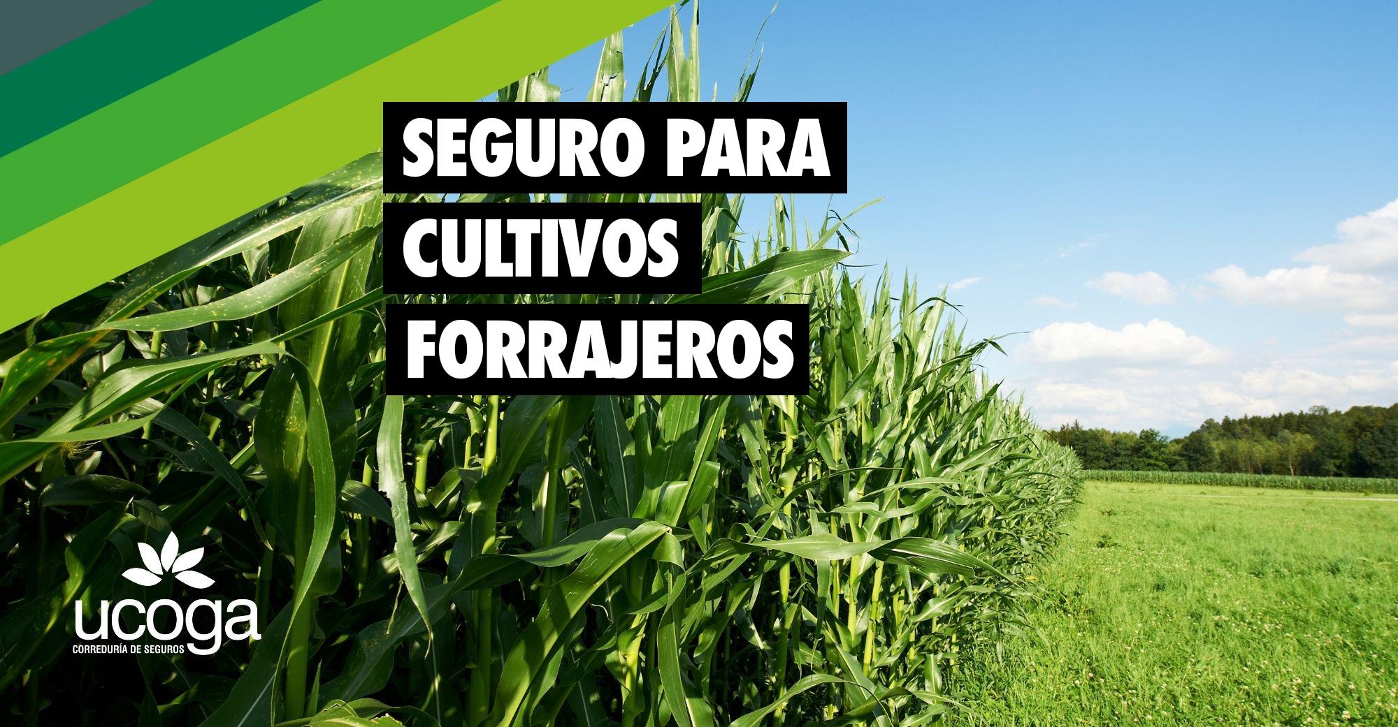 seguro maíz forrajero
