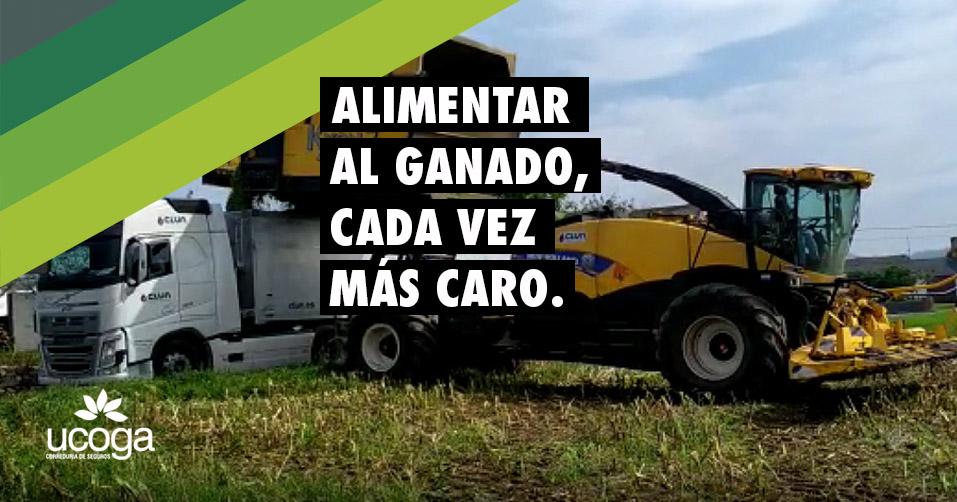 SUBE EL PRECIO DEL ALIMENTO PARA GANADO